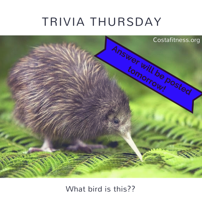 Trivia Thursday.png